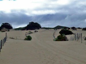 BH24, -35.015238, 117.038856 Defined track thru dunes